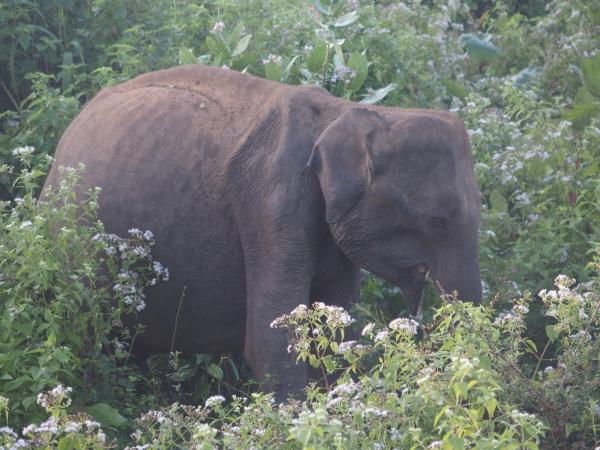 Et un éléphant...